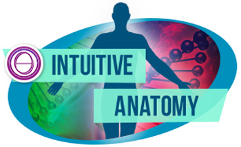 Cours ThetaHealing Anatomie Intuitive