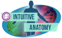 Formation ThetaHealing ®Anatomie Intuitive